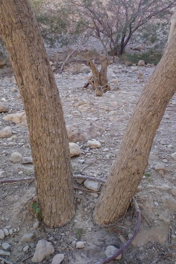 TALÁLD MEG A KIS SIVATAGI ÁLLATOT! // FIND THE LITTLE DESERT ANIMAL!